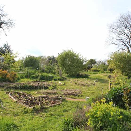 Rob Handy's forest garden in Somerset
