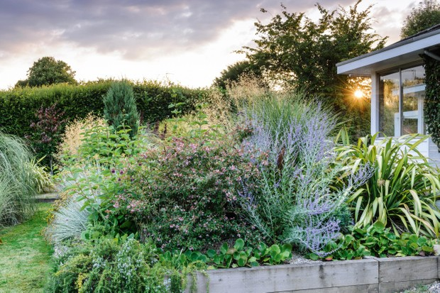Plants, including Abelia 'Edward Goucher' and Bergenia 'Autumn Magic' in Dorset gravel garden.