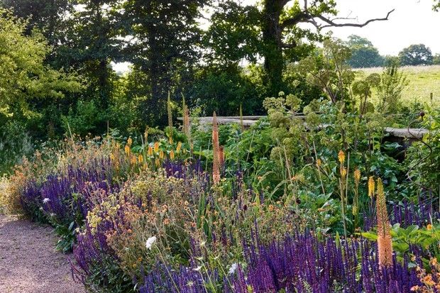 Alasdair Cameron's own garden in Devon