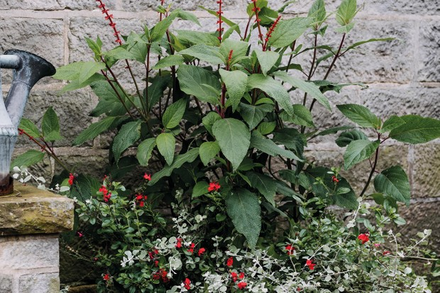 Pots of Style: a planting plan with salvia