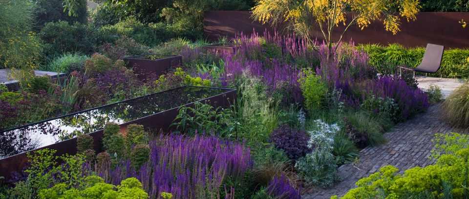 Tom and Sue Stuart-Smith's courtyard garden with Genista aetnensis, Euphorbia seguieriana subs. niciana, and Salvia nemorosa 'Amethyst'