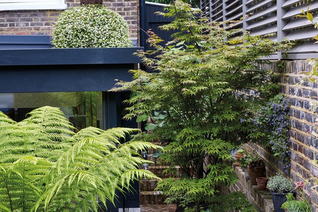 Small London garden by Alasdair Cameron