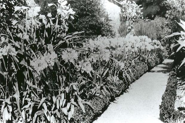 The original Heligan gardens