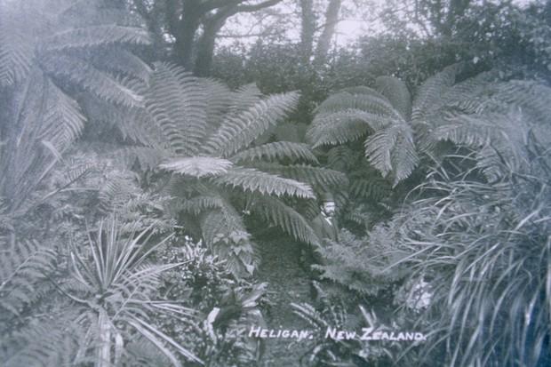 Heligan head gardener in New Zealand garden 1908