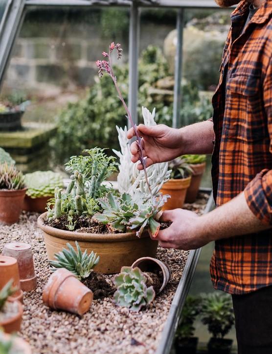 Ben Preston creating a succulent planting display