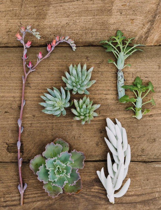 Succulents for a winter pot planting display
