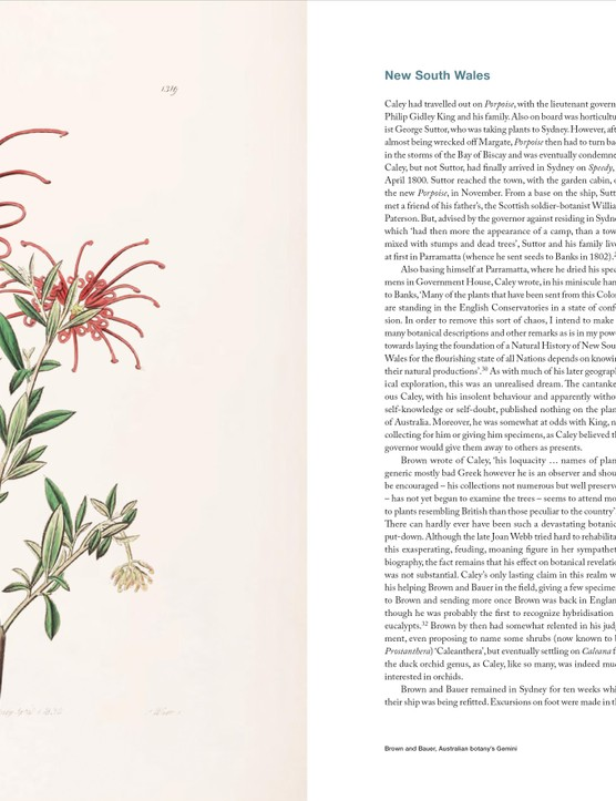 A spread from Botanical Revelation