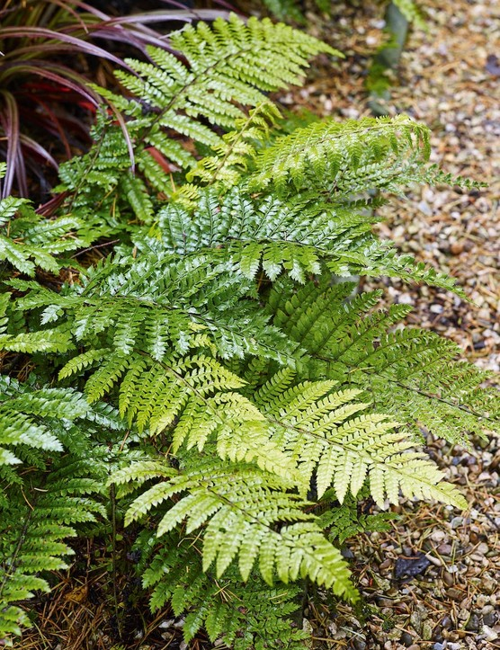 Propagating ferns: how to grow ferns