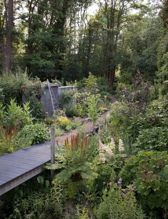 Fern Alder's woodland garden