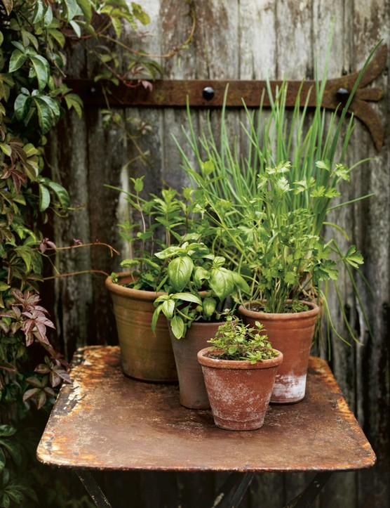 How to Grow Fruit and Vegetables in Pots