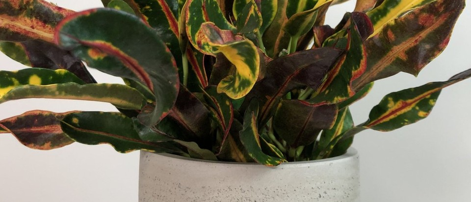 Best places to buy plants online for the garden and home