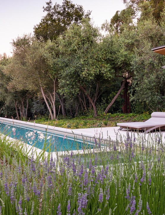 The guest suite gives on to the lap pool, fringed with fragrant lavender