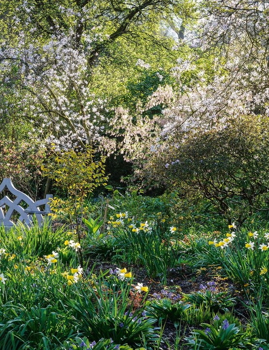 In the woodland area, bulbs, including jonquil daffodils and Scilla bifolia have naturalised under the deciduous canopy of Magnolia kobus, M. salicifolia and M. x proctoriana trees. Similar plantings mark the transition between garden and the countryside.