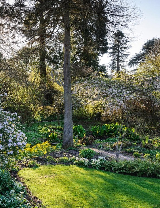Conifers punctuate the landscape leading the eye through the garden, and create a good foil for the magnolia blossom. Here Magnolia salicifolia and M. stellata are in full flower with Lysichiton americanus and L. camtschatcensis by a stream.