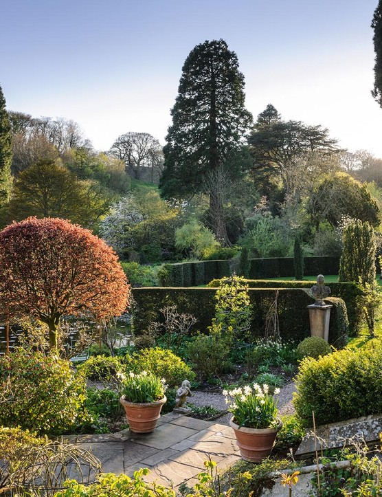 Near the house the garden is tailored more formally. Hedges are sharp, shrubs tightly clipped and roses trained over loops. On the terrace, Prunus cerasifera 'Nigra', sheared into a tight umbrella shape, is an excellent counterpoint to the conifers.