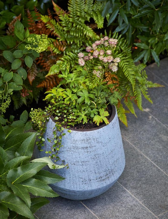 The pots are from Atelier Vierkant and harmonise well with the blue-grey granite slabs (from London Stone).
