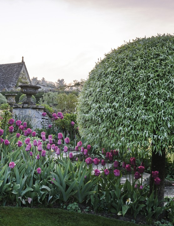Pink tulips line the steps from the terraces down to the lawn, beneath the cool grey-green foliage of a pair of weeping pears (Pyrus salicifolia 'Pendula') clipped into mushroom standards. Alchemilla mollis threads its way between the pavers.