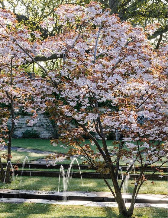 Prunus 'Fugenzo'