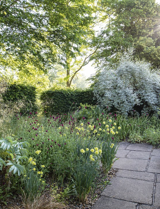 The sheltered Gravel Garden includes Melianthus major with its grey- green pinnate leaves, the crimson flowerheads of Knautia macedonica and bold clumps of golden-yellow Allium flavum. The grass Stipa tenuissima self- seeds happily and must be controlled.