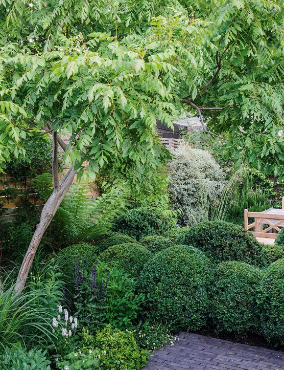 Double rows of tightly clipped box spheres and multi-stemmed trees Cercis siliquastrum and Koelreuteria paniculata are the framework for a simple but strong garden structure of miniature garden rooms.
