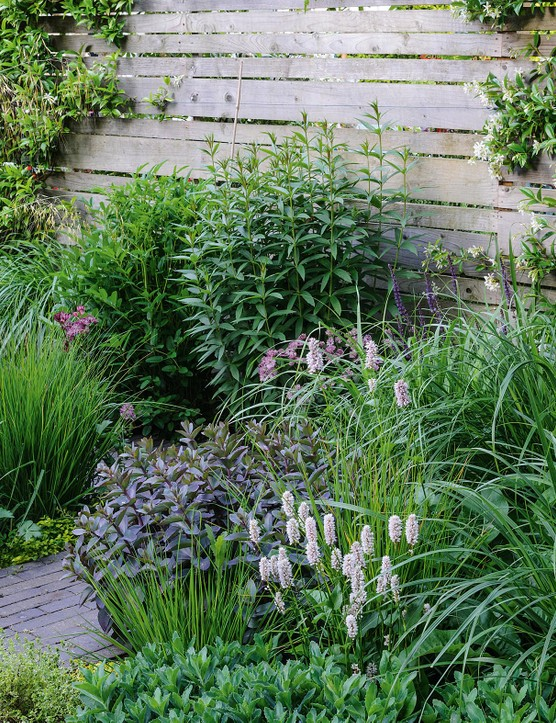 A lush collection of textures from mounds of Astrantia major 'Claret', upright spikes of lavender Persicaria bistorta 'Superba', and fountains of strappy leaves from Stipa gigantea is offset by a simple, weathered, wooden fence.