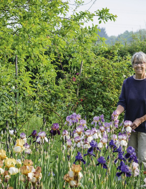 Sarah Cool has devoted much time and energy into tracking down Benton irises