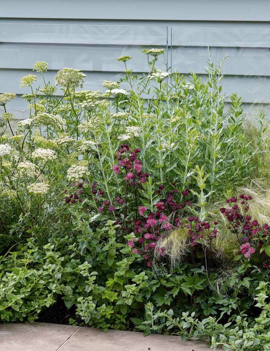 The sunny border, which runs alongside the glass balustrading for the basement extension, holds a soft mix of planting that includes Stipa tenuissima, Astrantia 'Ruby Star' and Geranium sanguineum 'Album' offering a long season of interest without blocking out light to the basement.