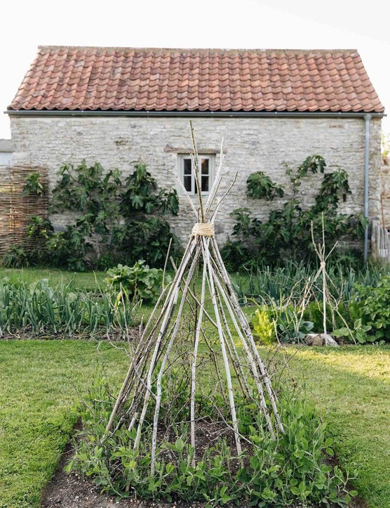 A plump teepee made by Louise from hazel pea sticks, collected from nearby woodland, supports sweet peas. Behind the teepee, figs are trained against the south-facing wall of the Farrowing House.
