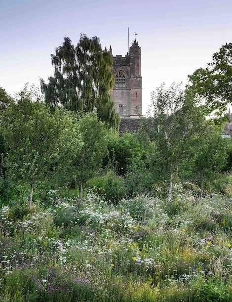 Making the most of the good drainage provided by the steep bank beneath the wall, Jo has introduced a thyme meadow that tumbles down into the main meadow mix from Emorsgate Seeds, which is based down the road from Jo's farmhouse. The tall spires of Verbascum thapsus add vertical accents that link to the tower of the 14th-century village church beyond.