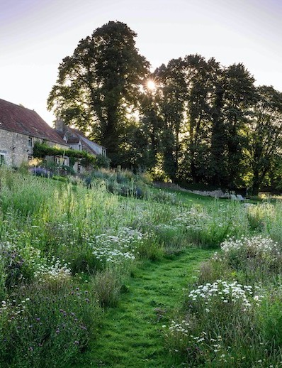 A mown path cuts through Jo McKerr's glorious wildflower meadow where Dipsacus fullonum, Malva neglecta and Reseda luteola from the original seed bank combine with Leucanthemum vulgare, Centaurea nigra and Daucus carota from an Emorsgate Seeds mixture for chalk and limestone soils.