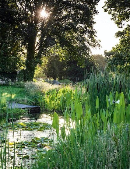 The pond offers a focal point for the long, sloping lawn and draws the eye to the middle ground. It is planted up to attract wildlife, such as dragonflies and damselflies, with Pontederia cordata, bulrushes, loosestrife, meadowsweet and waterlilies.