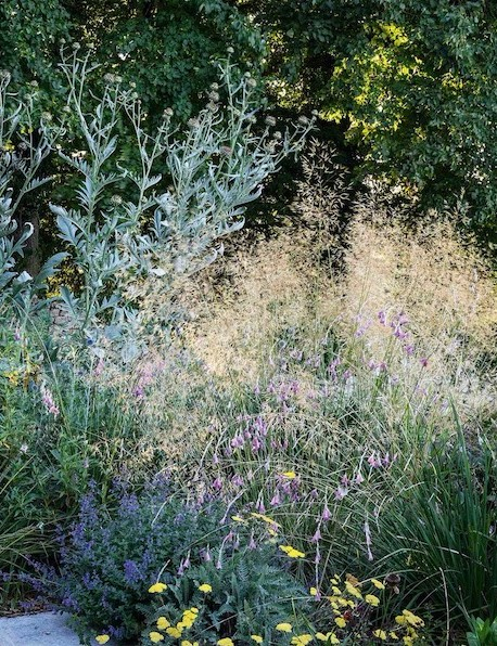 The borders to the rear of Jo's house are filled with Dierama pulcherrimum, angel's fishing rods, which dance above Achillea 'Moonshine'. Behind these, in an area that bakes in the afternoon sun, tower cardoons and the soft grass Stipa gigantea.
