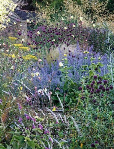 Jo is passionate about wildlife and her borders are filled with plants that attract insects. Here these include fennel, Nepeta racemosa 'Walker's Low', Allium sphaerocephalon, the round-headed leek, and evening primrose, Oenothera stricta 'Sulphurea'.
