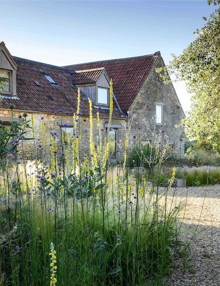In the sunny gravel garden situated to the front of the house, plants suited to the hot, dry conditions, including Verbena bonariensis, Erigeron karvinskianus, Oenothera stricta, the grass Stipa tenuissima, fennel and verbascums, are allowed to self-seed freely.
