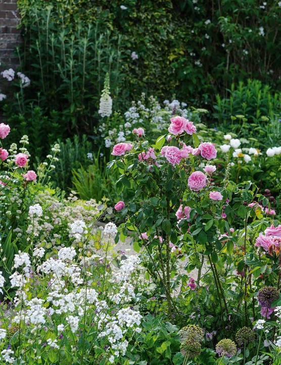 Scent is a powerful tool in a garden and at Upper Sydling it is used to masterly effect. Here in the Cutting Garden the highly fragrant sweet rocket (Hesperis matronalis) makes a perfect partner for old roses, together with white centranthus, chamaenerion and Alchemilla mollis.