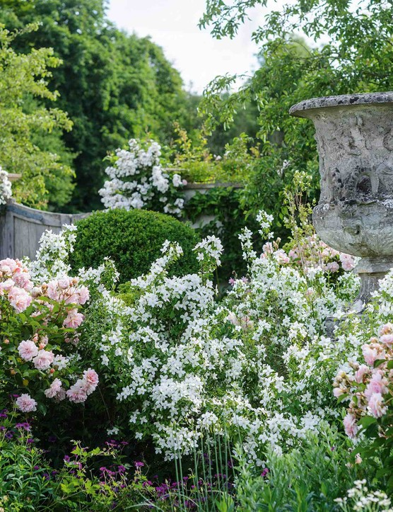 In the Swimming Pool Courtyard, Rosa 'Felicia', a repeat-flowering musk rose bred in 1928, swirls and eddies around a lichen-covered stone vase. Its deep-pink, double blooms flushed with salmon pink in the centre are in perfect harmony with the white of Philadelphus 'Manteau d'Hermine'.