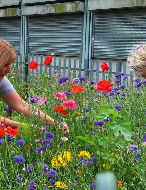 Sue Hulme (right) and Deb Fath pick flowers at the Wonky Garden, Cheshire. Sue set up the community project with friends she met during cancer treatment