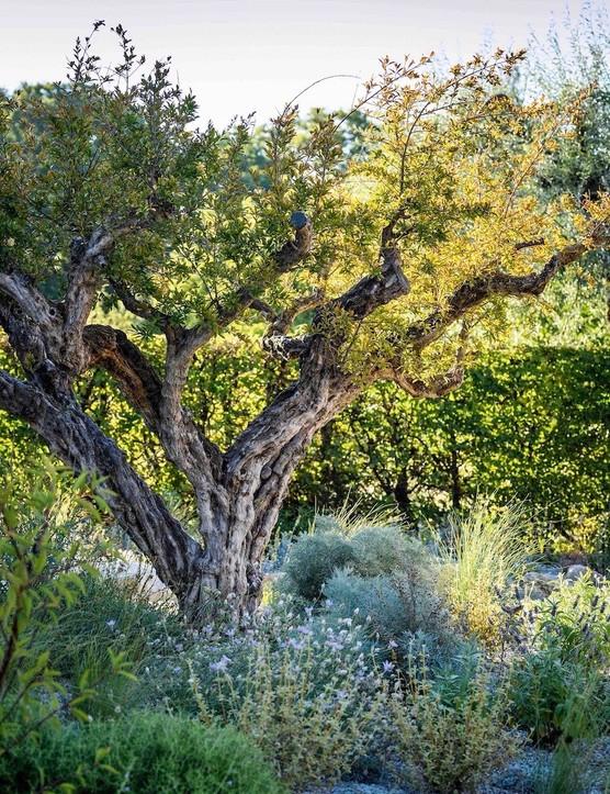 Annuals flourish and bulbs naturalise beneath the pomegranate tree