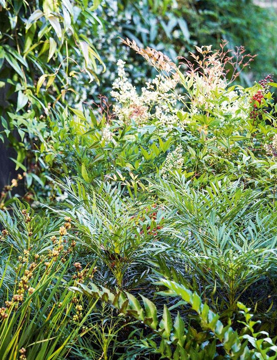 Libertia chilensis, which holds handsome seedheads from midsummer, Mahonia eurybracteata subsp. ganpinensis 'Soft Caress' and Cyrtomium falcatum create a mix of textures and shapes