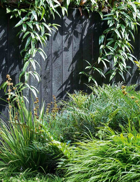 The burnt-timber fence is softened with swags of evergreen Clematis armandii, which has been trained on galvanised wire mesh attached to the top of the fence