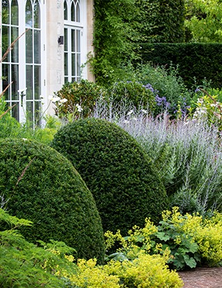 Flanking the drawing room doors, large domes of yew rise out of a sea of Alchemilla mollis and Salvia 'Blue Spire'. Upright spikes of Calamagrostis x acutiflora 'Stricta' frame the foreground, while the bed at the back is filled with the feathery, pink panicles of Pennisetum orientale 'Karley Rose', bright-green Euphorbia palustris and lavender-blue Aster x frikartii 'Mönch'.