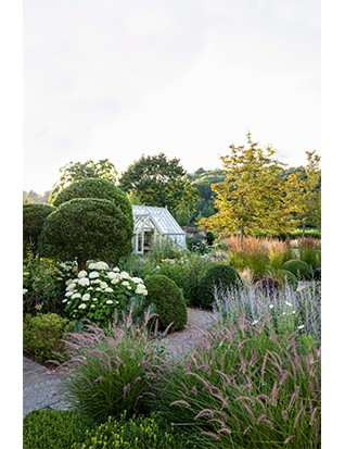 In front of the bespoke Alitex greenhouse, clipped trees of bay and Phillyrea latifolia combine with Amelanchier x grandiflora 'Robin Hill', white Hydrangea arborescens 'Annabelle', pink Pennisetum orientale 'Karley Rose' and soft-blue perovskia.