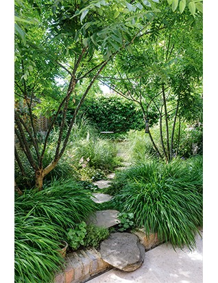 A pair of Japanese pagoda trees (Styphnolobium japonicum) are an airy presence at the front of the garden, with mounds of Hakonechloa macra at their feet. Stepping up from the smooth concrete area by the house, a fixed boulder is followed by fettled, York paving stepping stones.