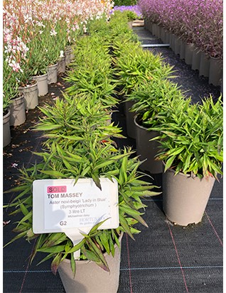 Row up on row of perfect plants and flowers, all set for inspection by the designers who ordered them.