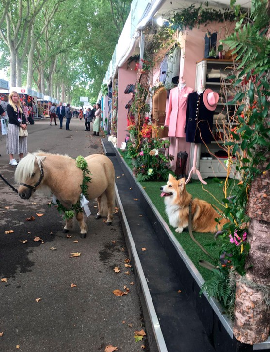 Tiny horse meets cute dog. There's literally something for everyone at Chelsea.