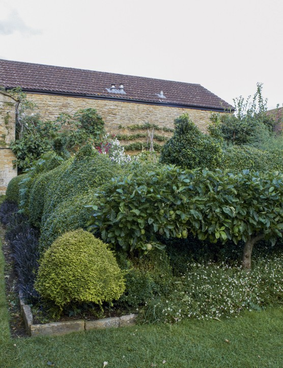 The vegetable garden is built over deeper soil than the rest of the garden and is surrounded by box hedging and topiary, and by a pleached apple tree underplanted with Erigeron karvinskianus