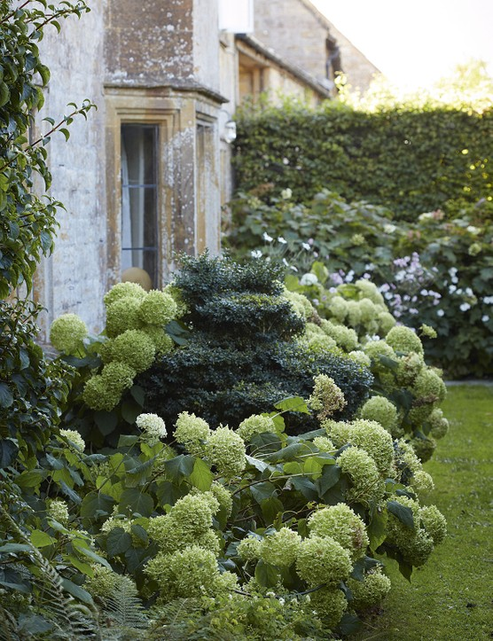 The greenish-white, spherical flowers of Hydrangea arborescens 'Annabelle' echo the mounds of the box shapes in the front garden without distracting from them; any flowering plants complement rather than threaten the overall green palette.