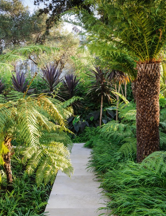 The pathway at the top of the garden leads through two types of tree fern (Dicksonia antarctica, right, and Cyathea australis, left) and is softened by the arching stems of ferns and Hakonechloa macra grass. Red-leaved Cordyline australis Purpurea Group, underplanted with Colocasia esculenta 'Black Magic', adds depth to the planting.
