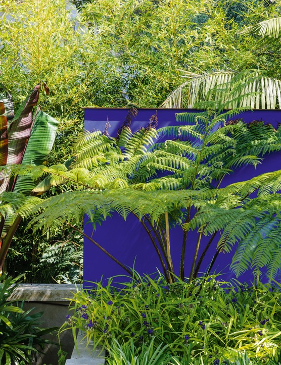 The upright Ensete ventricosum 'Maurellii', with its paddle-shaped leaves, adds tones of burgundy to the predominantly green planting around the feature wall against the backdrop of an existing screen of bamboo. The strappy leaves of Rhapis excelsa (left) create textural contrast.