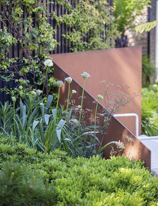 hite Allium nigrum, backed by a Corten steel screen, rises out of mounds of Pinus mugo and Pittosporum tobira;